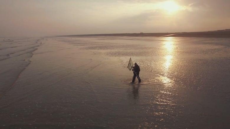 Pêche à pied – La crevette