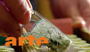 Océans, le mystère plastique | ARTE