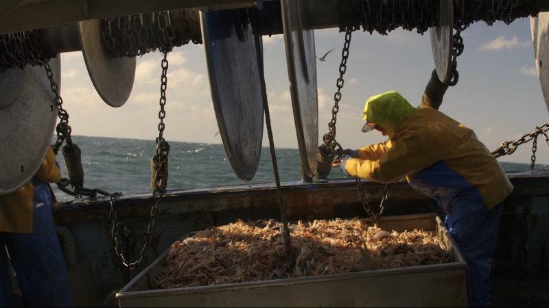 Carnet de pêche
